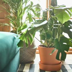 Plants, plant pots & stands