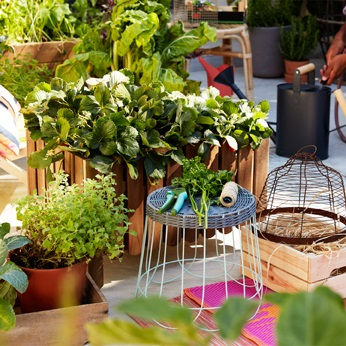 Outdoor pots & plants
