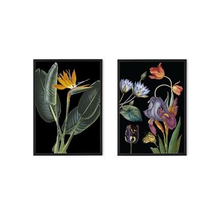 'Vintage Set of 2 Framed Prints' Natural History Museum A2