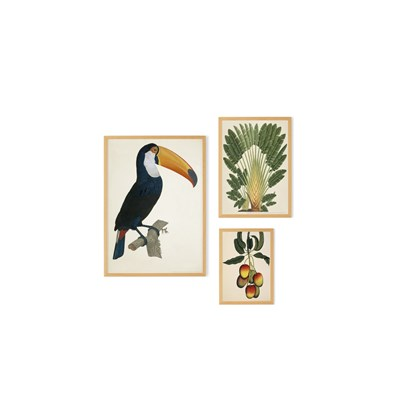 'Toco Toucan Set of 3 Framed Prints' Natural History Museum